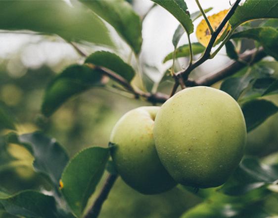 Fruita i verdura ecològica